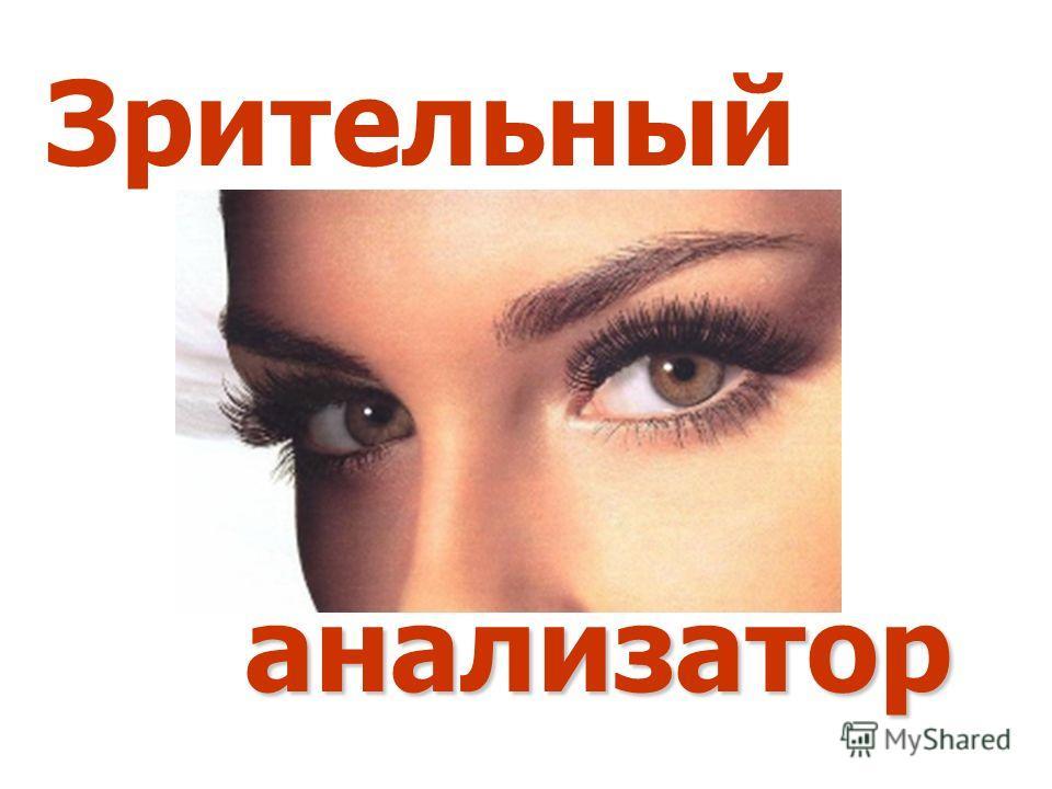 Зрительный анализатор анализатор