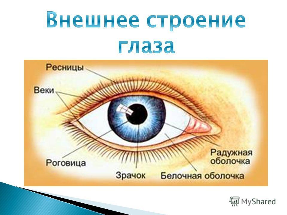 Линзы корректирующие зрение отзывы