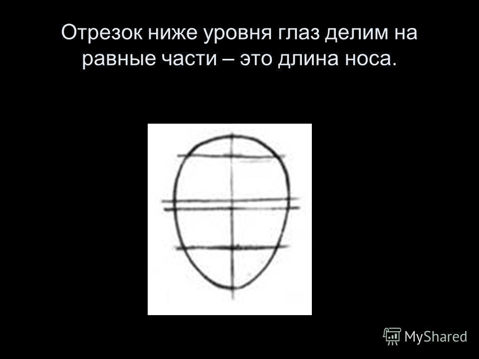 Отрезок ниже уровня глаз делим на равные части – это длина носа.