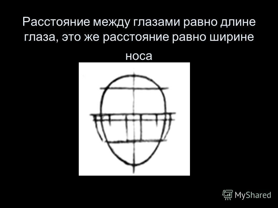 Расстояние между глазами равно длине глаза, это же расстояние равно ширине носа