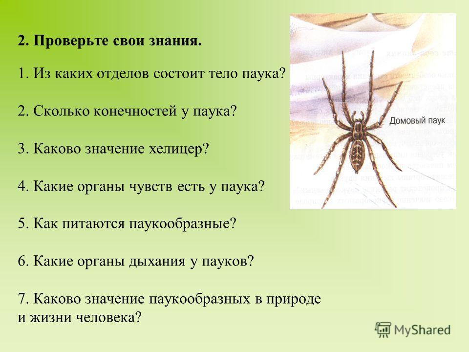 2. Проверьте свои знания. 1. Из каких отделов состоит тело паука? 2. Сколько конечностей у паука? 3. Каково значение хелицер? 4. Какие органы чувств есть у паука? 5. Как питаются паукообразные? 6. Какие органы дыхания у пауков? 7. Каково значение пау