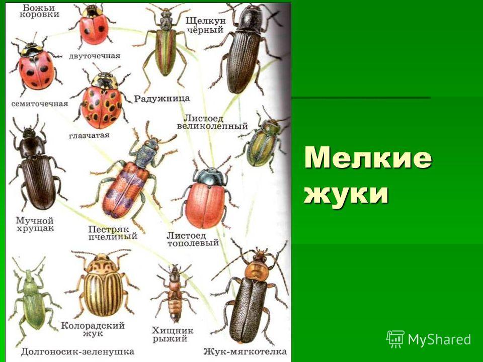 Мелкие жуки