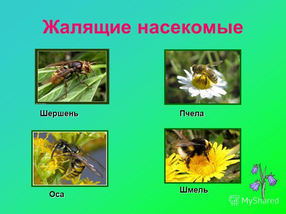 Жалящие насекомые ШершеньПчела Оса Шмель