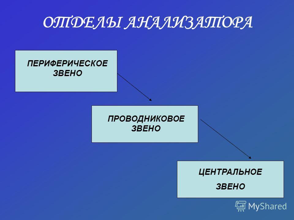 ОТДЕЛЫ АНАЛИЗАТОРА ПЕРИФЕРИЧЕСКОЕ ЗВЕНО ПРОВОДНИКОВОЕ ЗВЕНО ЦЕНТРАЛЬНОЕ ЗВЕНО