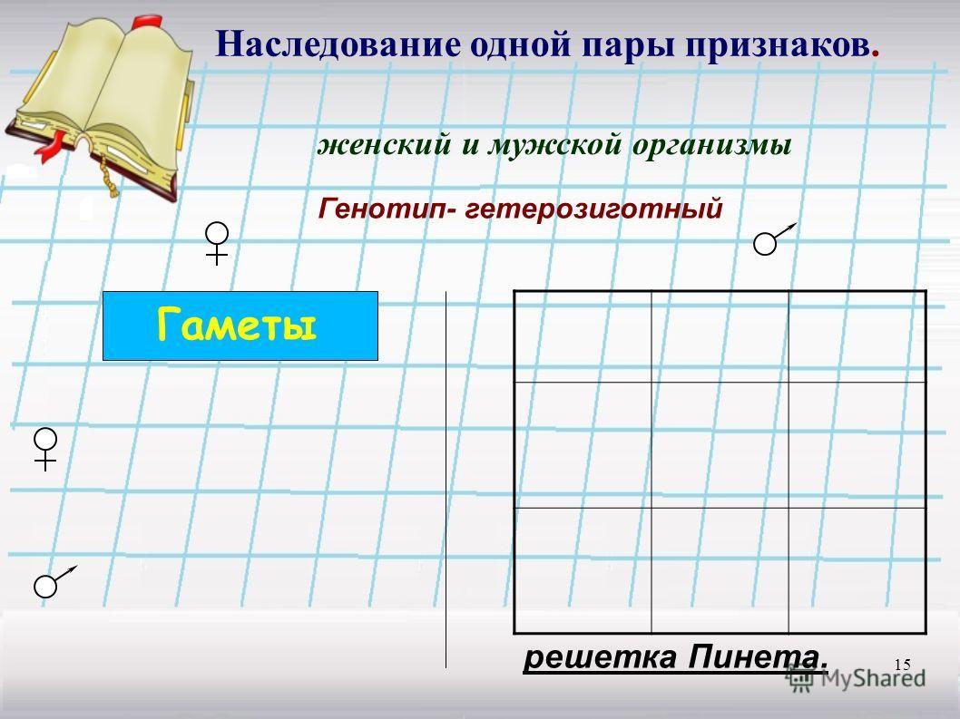 15 Наследование одной пары признаков. женский и мужской организмы Генотип- гетерозиготный Гаметы решетка Пинета.