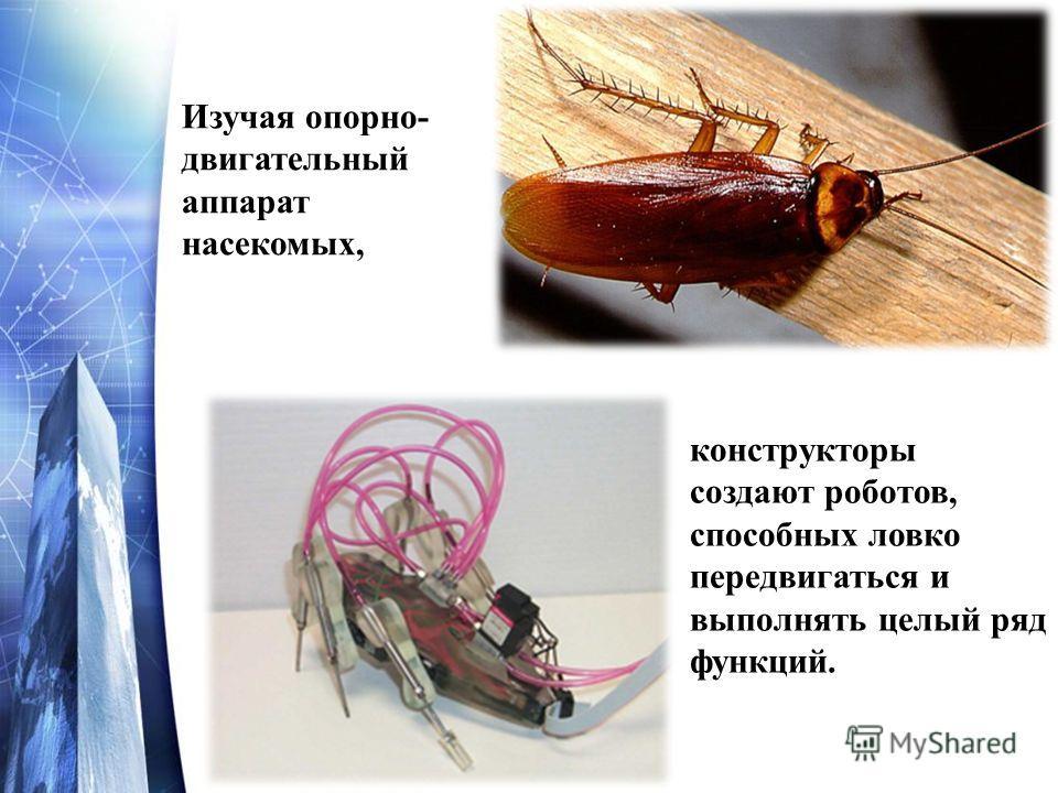 Изучая опорно- двигательный аппарат насекомых, конструкторы создают роботов, способных ловко передвигаться и выполнять целый ряд функций.