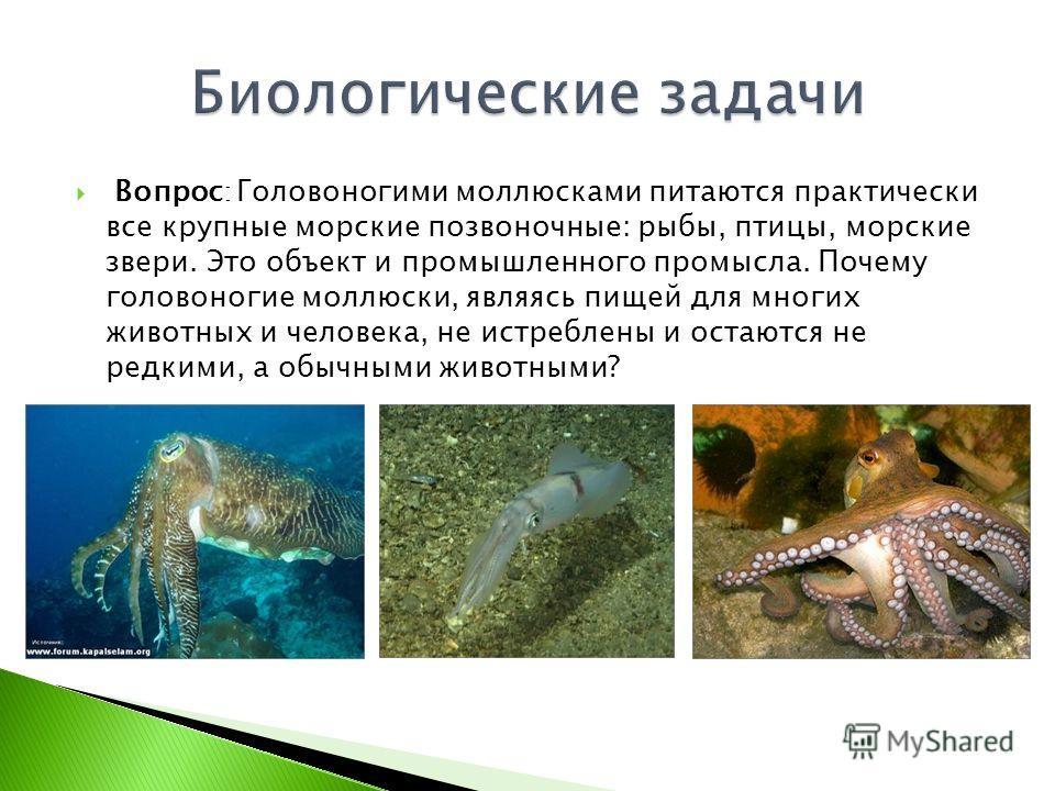 Вопрос : Головоногими моллюсками питаются практически все крупные морские позвоночные: рыбы, птицы, морские звери. Это объект и промышленного промысла. Почему головоногие моллюски, являясь пищей для многих животных и человека, не истреблены и остаютс