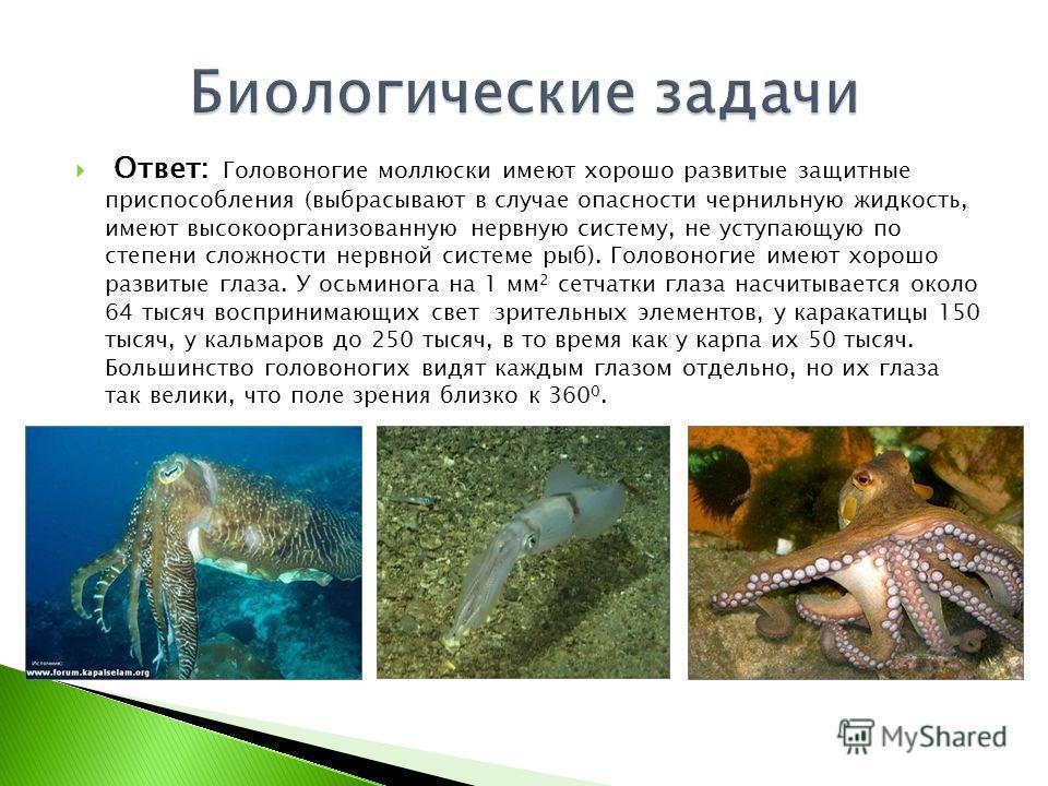 Ответ: Головоногие моллюски имеют хорошо развитые защитные приспособления (выбрасывают в случае опасности чернильную жидкость, имеют высокоорганизованную нервную систему, не уступающую по степени сложности нервной системе рыб). Головоногие имеют хоро