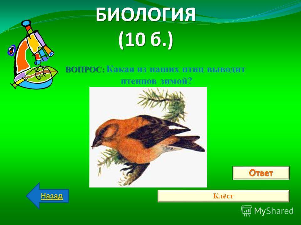 БИОЛОГИЯ (10 б.) Ответ Клёст Назад ВОПРОС: ВОПРОС: Какая из наших птиц выводит птенцов зимой?