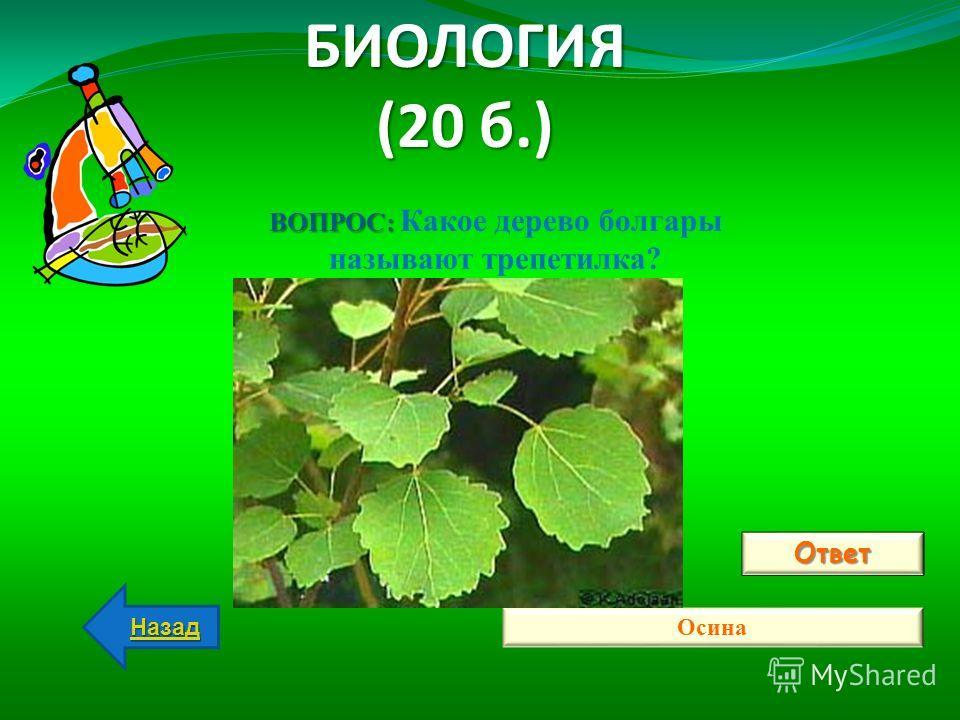 БИОЛОГИЯ (20 б.) Ответ Осина Назад ВОПРОС: ВОПРОС: Какое дерево болгары называют трепетилка?