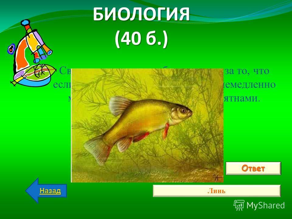 БИОЛОГИЯ (40 б.) Ответ Линь Назад Свое название эта рыба получила за то, что если ее вытащить на берег, то она немедленно меняет окраску – покрывается пятнами. ВОПРОС: О какой рыбе идет речь?