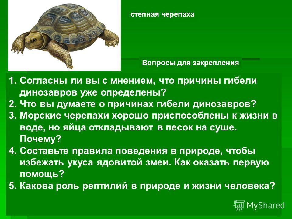 степная черепаха Вопросы для закрепления 1.Согласны ли вы с мнением, что причины гибели динозавров уже определены? 2.Что вы думаете о причинах гибели динозавров? 3.Морские черепахи хорошо приспособлены к жизни в воде, но яйца откладывают в песок на с