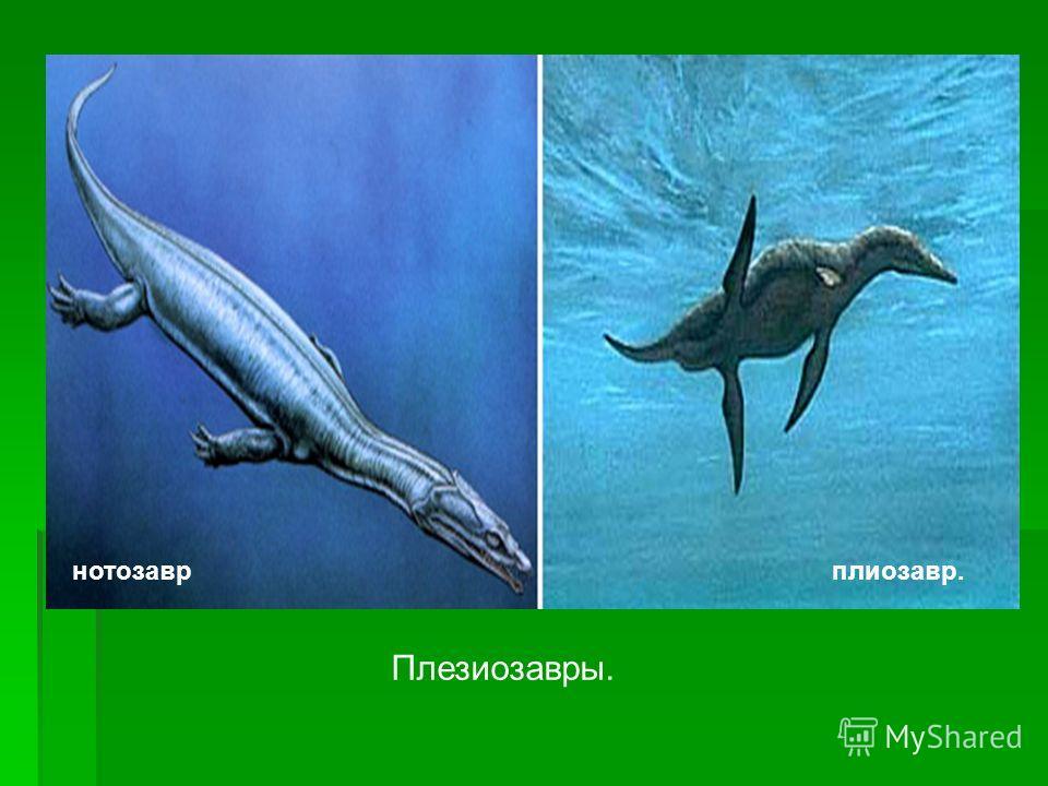 Плезиозавры. нотозаврплиозавр.
