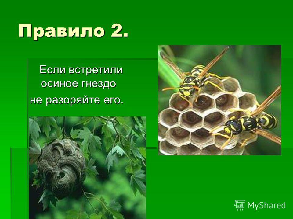 Правило 2. Если встретили осиное гнездо Если встретили осиное гнездо не разоряйте его.