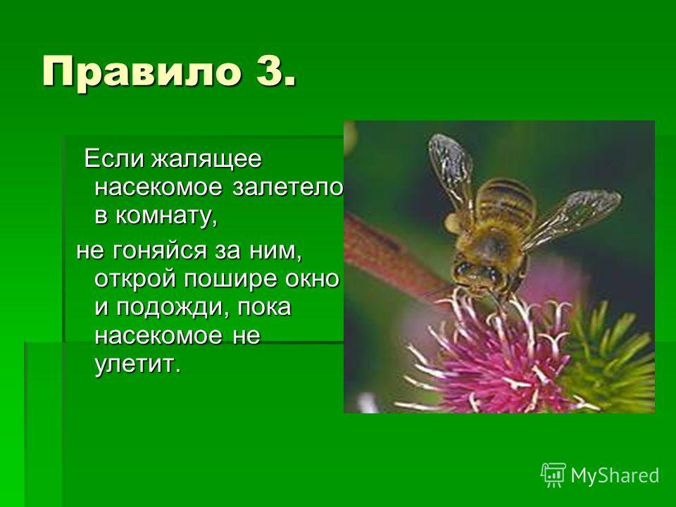 Правило 3. Если жалящее насекомое залетело в комнату, Если жалящее насекомое залетело в комнату, не гоняйся за ним, открой пошире окно и подожди, пока насекомое не улетит. не гоняйся за ним, открой пошире окно и подожди, пока насекомое не улетит.