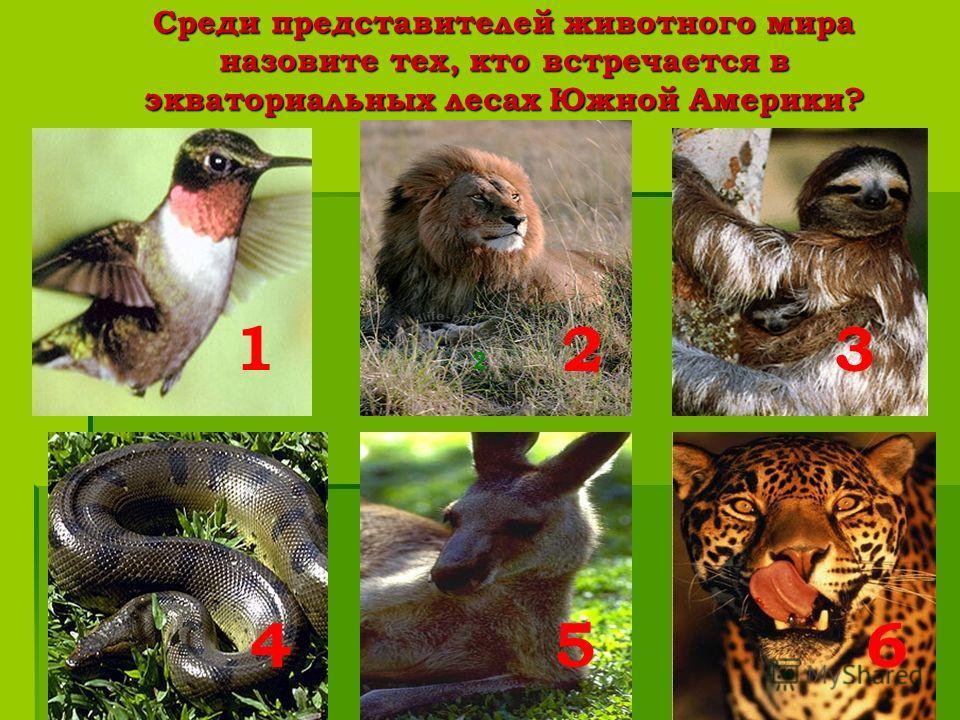 Среди представителей животного мира назовите тех, кто встречается в экваториальных лесах Южной Америки? 2 2 1 3 456