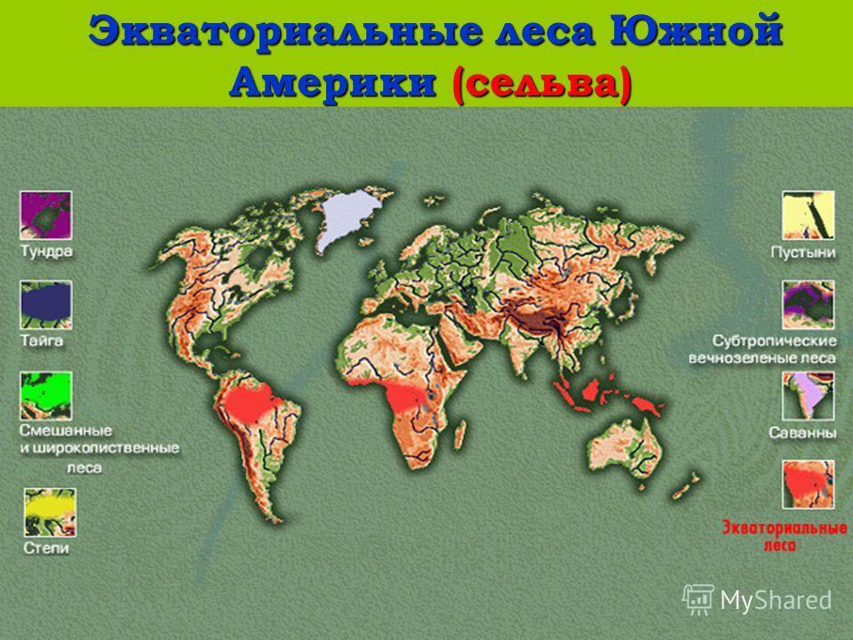 Экваториальные леса Южной Америки (сельва) Экваториальные леса Южной Америки (сельва)