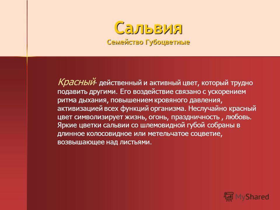 Сальвия Семейство Губоцветные Красный - действенный и активный цвет, который трудно подавить другими. Его воздействие связано с ускорением ритма дыхания, повышением кровяного давления, активизацией всех функций организма. Неслучайно красный цвет симв