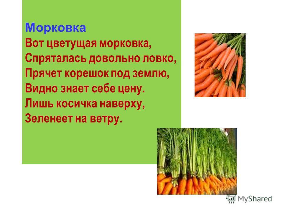 Морковка Вот цветущая морковка, Спряталась довольно ловко, Прячет корешок под землю, Видно знает себе цену. Лишь косичка наверху, Зеленеет на ветру.