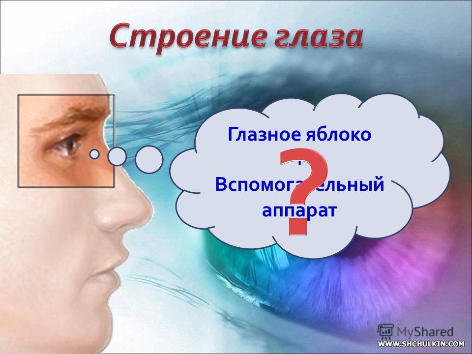Глазное яблоко + Вспомогательный аппарат
