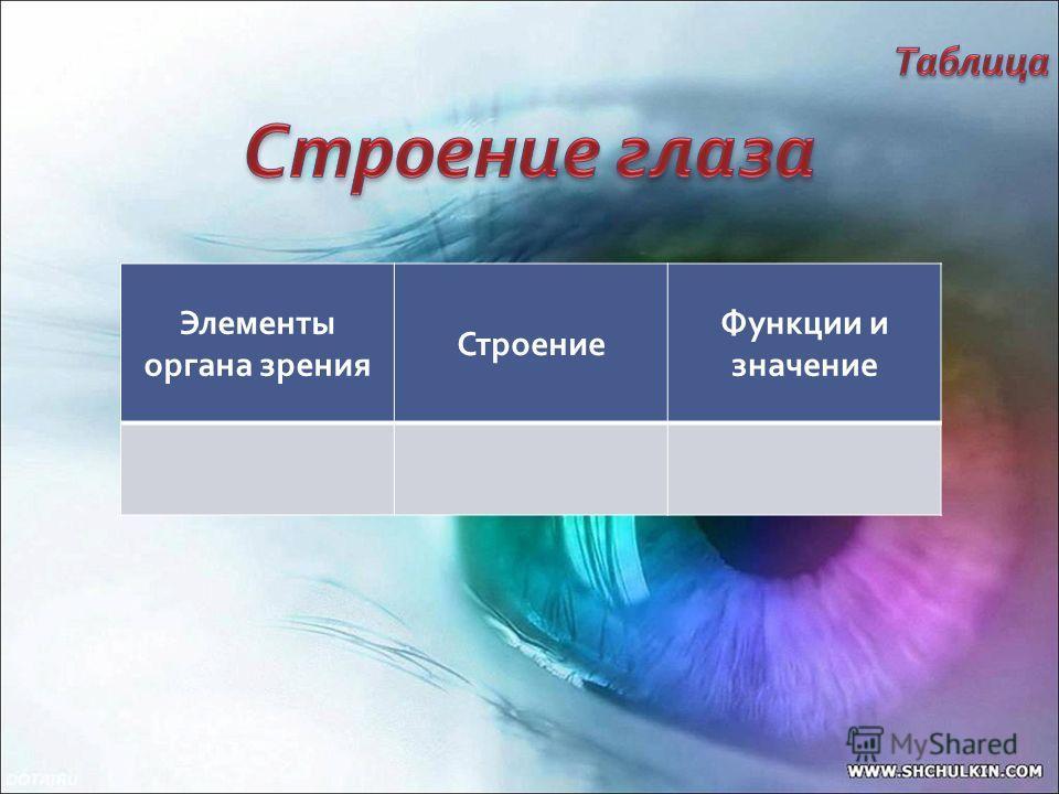 Элементы органа зрения Строение Функции и значение