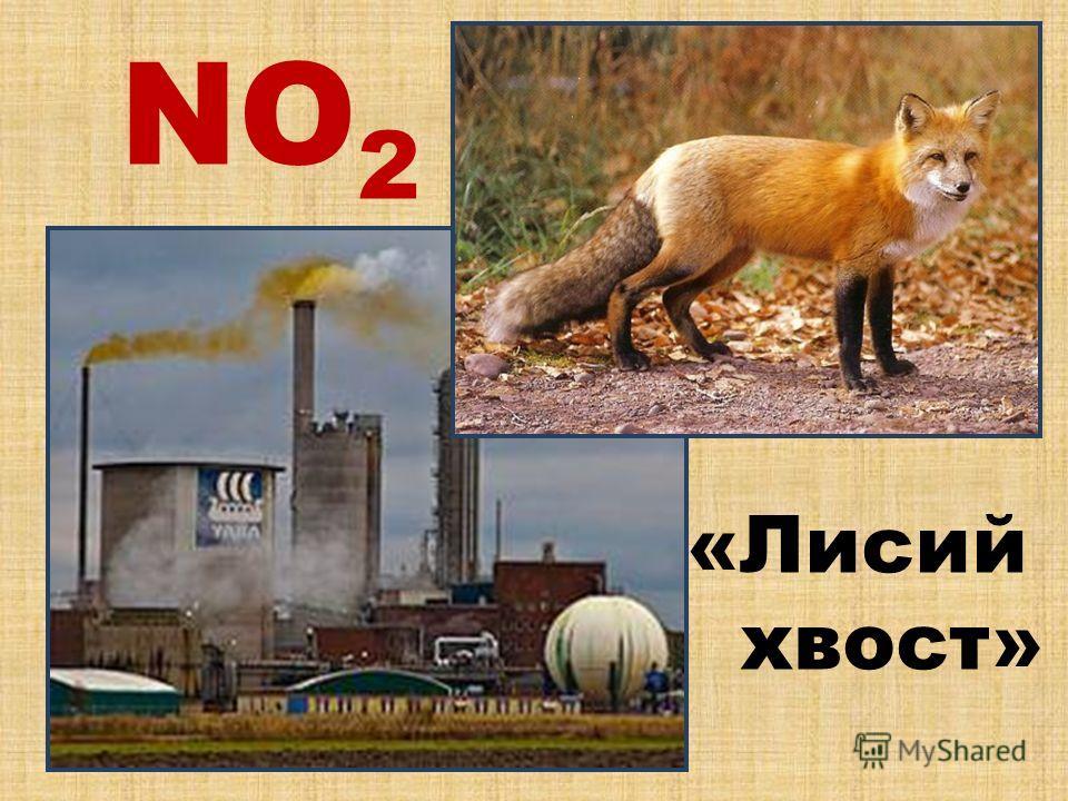 NO2NO2 «Лисий хвост»