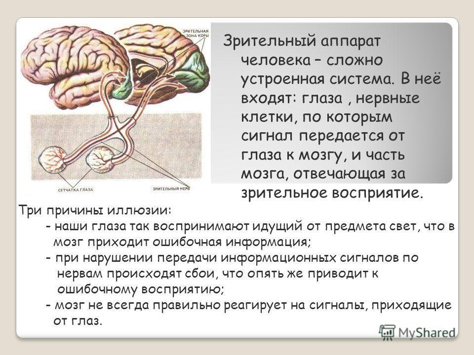 Зрительный аппарат человека – сложно устроенная система. В неё входят: глаза, нервные клетки, по которым сигнал передается от глаза к мозгу, и часть мозга, отвечающая за зрительное восприятие. Три причины иллюзии: - наши глаза так воспринимают идущий