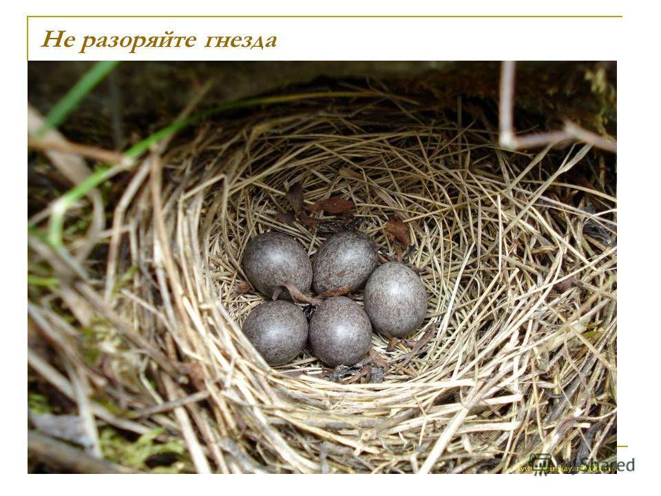 Не разоряйте гнезда