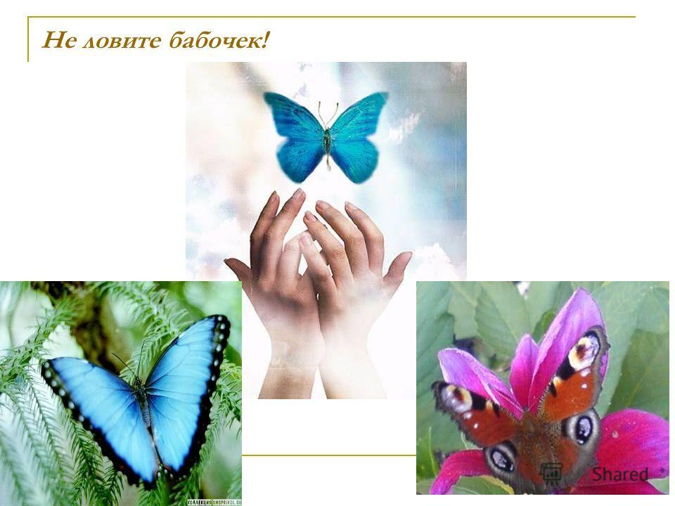 Не ловите бабочек!