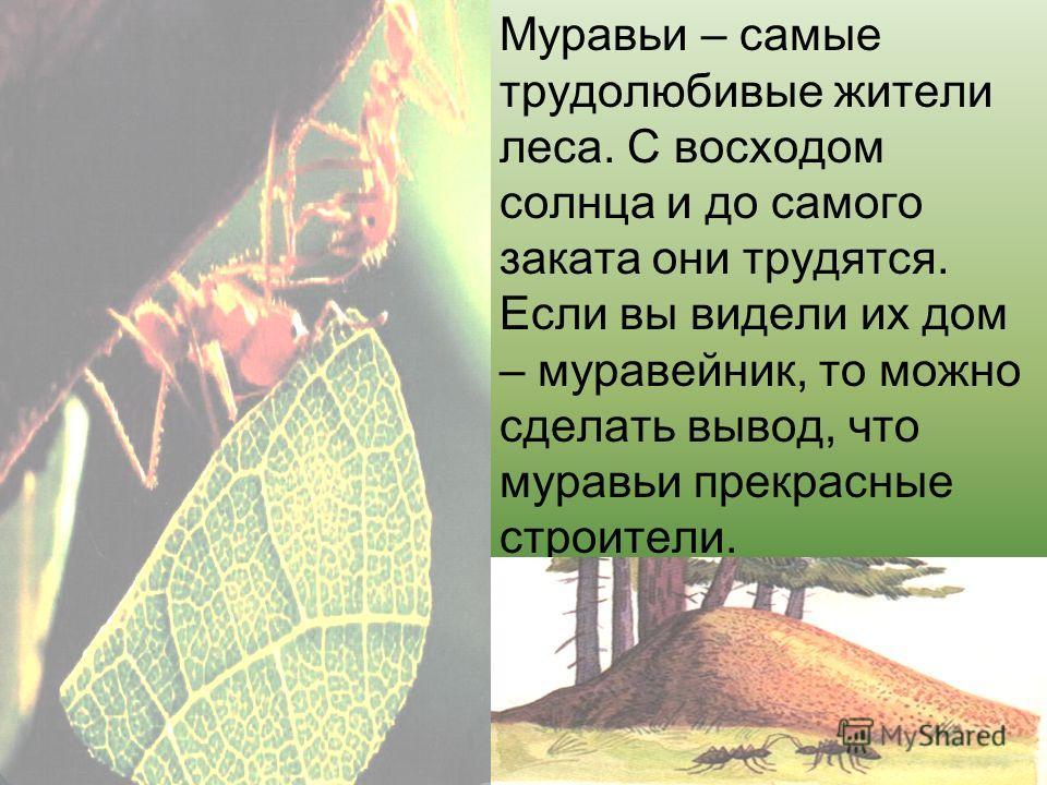 Муравьи – самые трудолюбивые жители леса. С восходом солнца и до самого заката они трудятся. Если вы видели их дом – муравейник, то можно сделать вывод, что муравьи прекрасные строители.