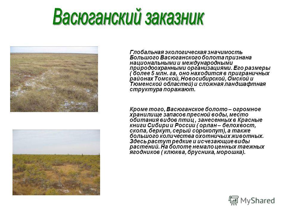 Глобальная экологическая значимость Большого Васюганского болота признана национальными и международными природоохранными организациями. Его размеры ( более 5 млн. га, оно находится в приграничных районах Томской, Новосибирской, Омской и Тюменской об