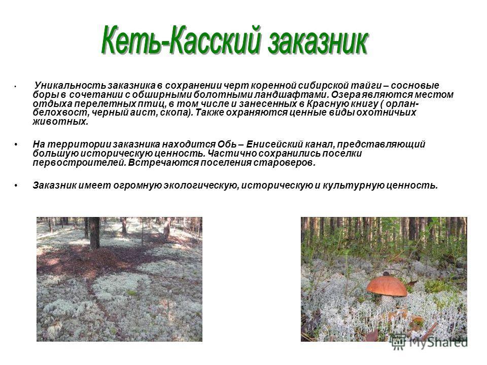 Уникальность заказника в сохранении черт коренной сибирской тайги – сосновые боры в сочетании с обширными болотными ландшафтами. Озера являются местом отдыха перелетных птиц, в том числе и занесенных в Красную книгу ( орлан- белохвост, черный аист, с