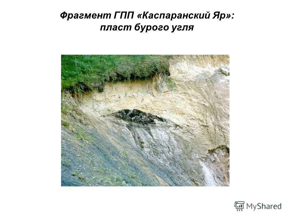 Фрагмент ГПП «Каспаранский Яр»: пласт бурого угля