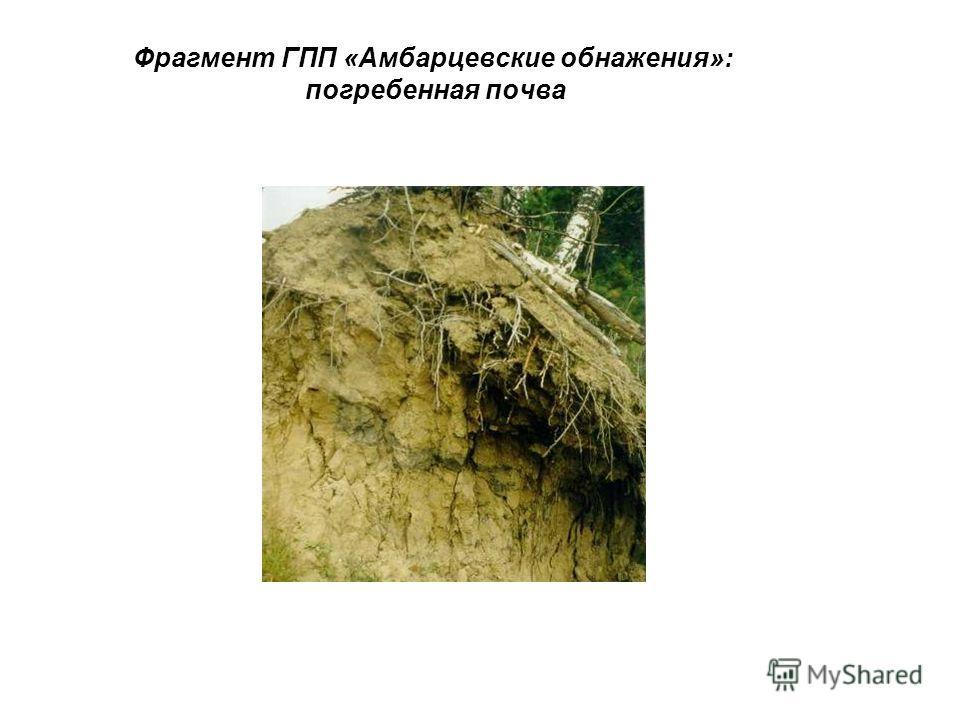 Фрагмент ГПП «Амбарцевские обнажения»: погребенная почва
