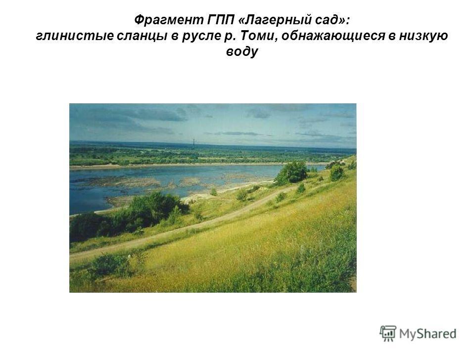 Фрагмент ГПП «Лагерный сад»: глинистые сланцы в русле р. Томи, обнажающиеся в низкую воду