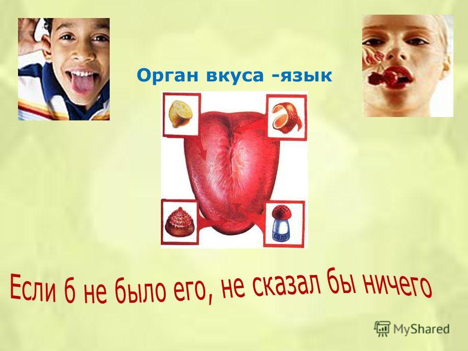 Орган вкуса -язык