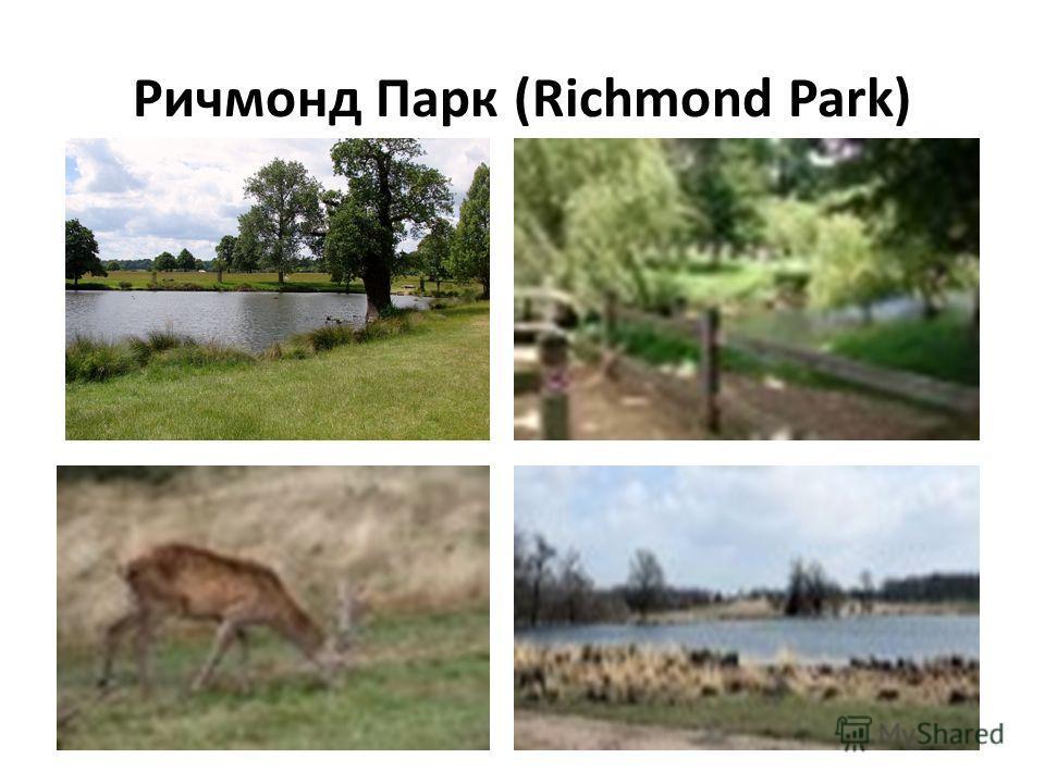 Ричмонд Парк (Richmond Park)