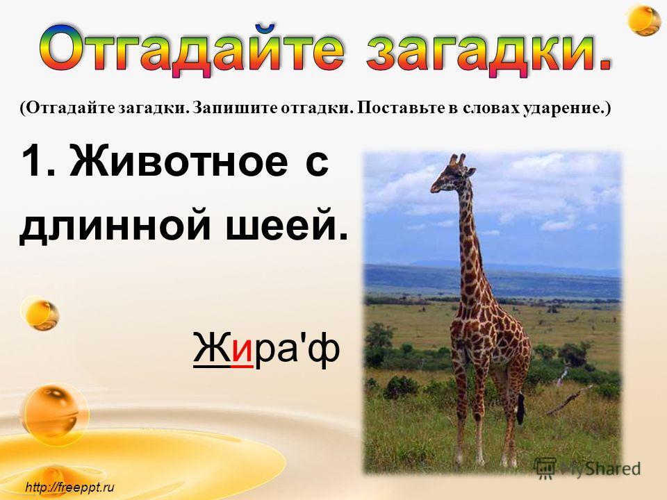 1. Животное с длинной шеей. http://freeppt.ru (Отгадайте загадки. Запишите отгадки. Поставьте в словах ударение.) Жира'ф