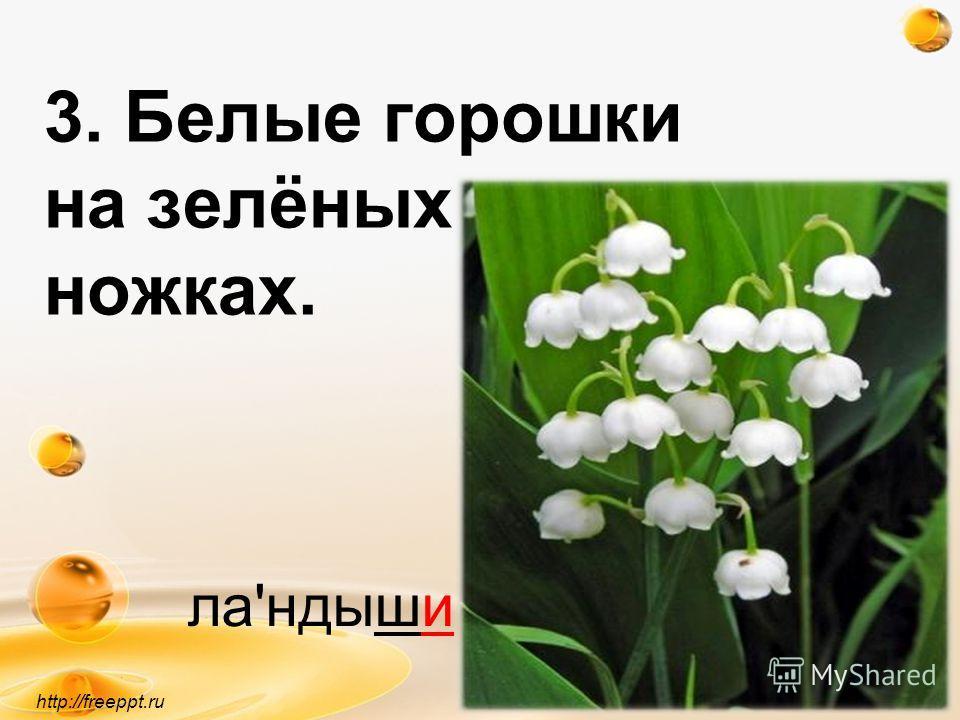 3. Белые горошки на зелёных ножках. http://freeppt.ru ла'ндыши