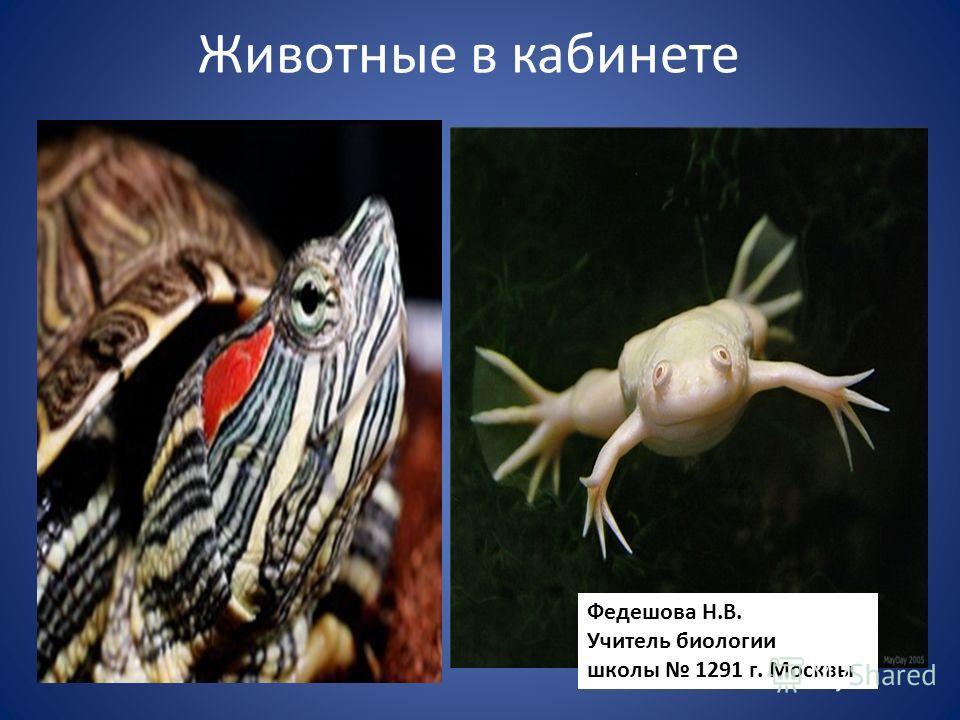 Животные в кабинете Федешова Н.В. Учитель биологии школы 1291 г. Москвы
