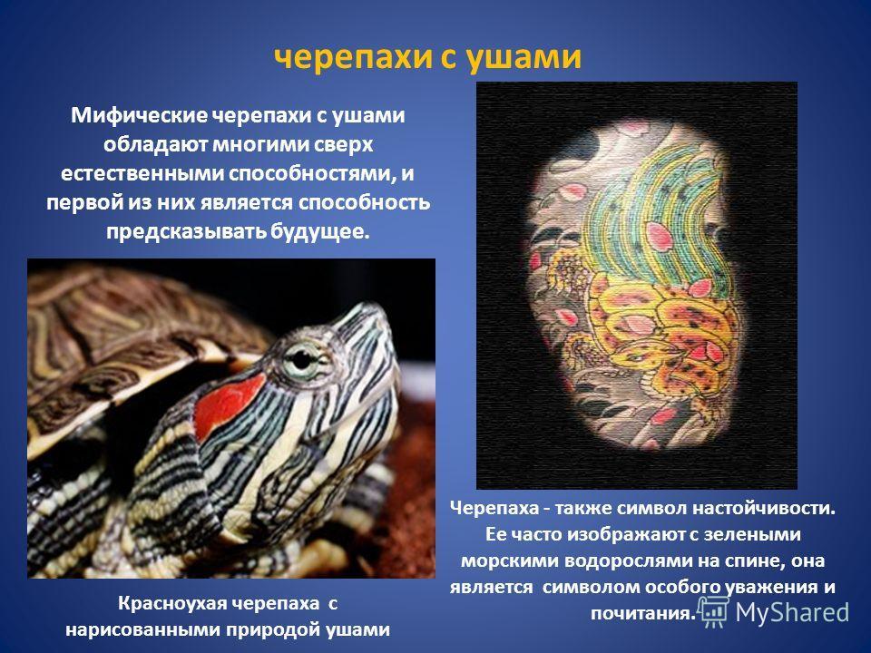 Мифические черепахи с ушами обладают многими сверх естественными способностями, и первой из них является способность предсказывать будущее. черепахи с ушами Черепаха - также символ настойчивости. Ее часто изображают с зелеными морскими водорослями на