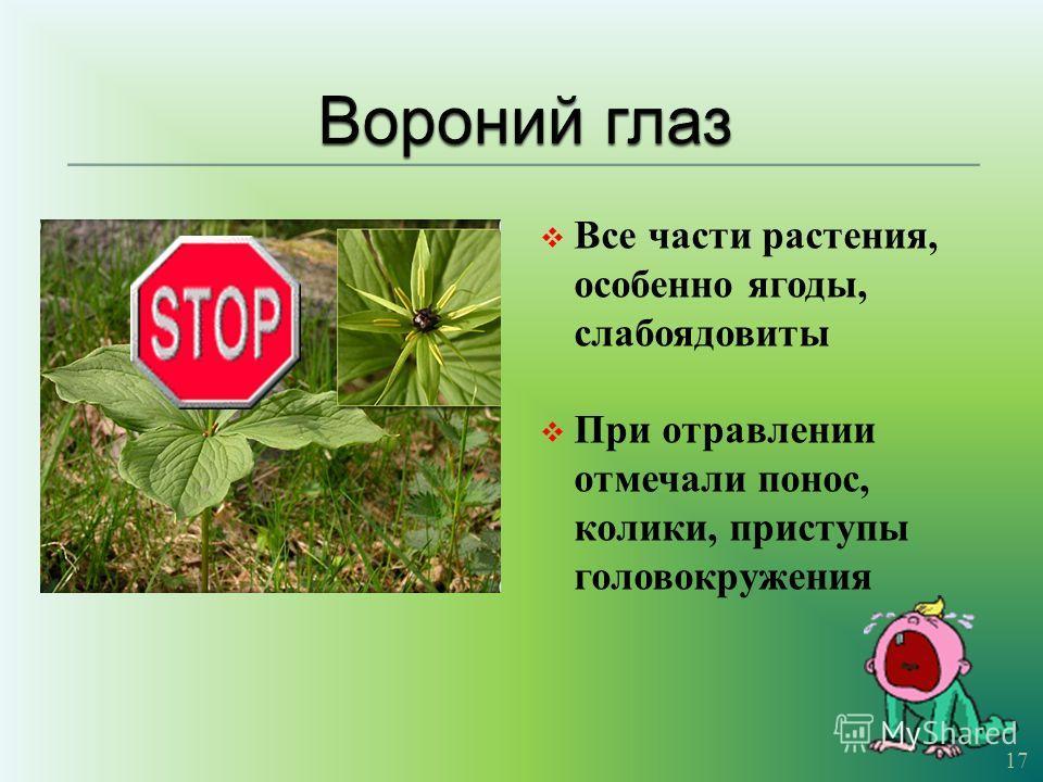 Все части растения, особенно ягоды, слабоядовиты При отравлении отмечали понос, колики, приступы головокружения 17
