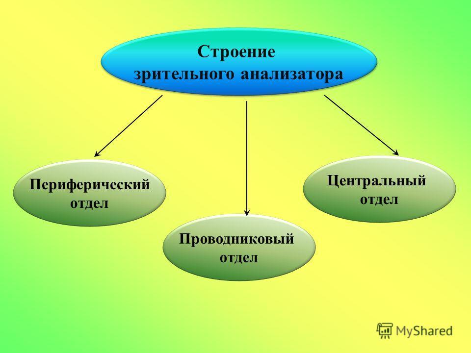 Строение зрительного анализатора Строение зрительного анализатора Периферический отдел Проводниковый отдел Центральный отдел