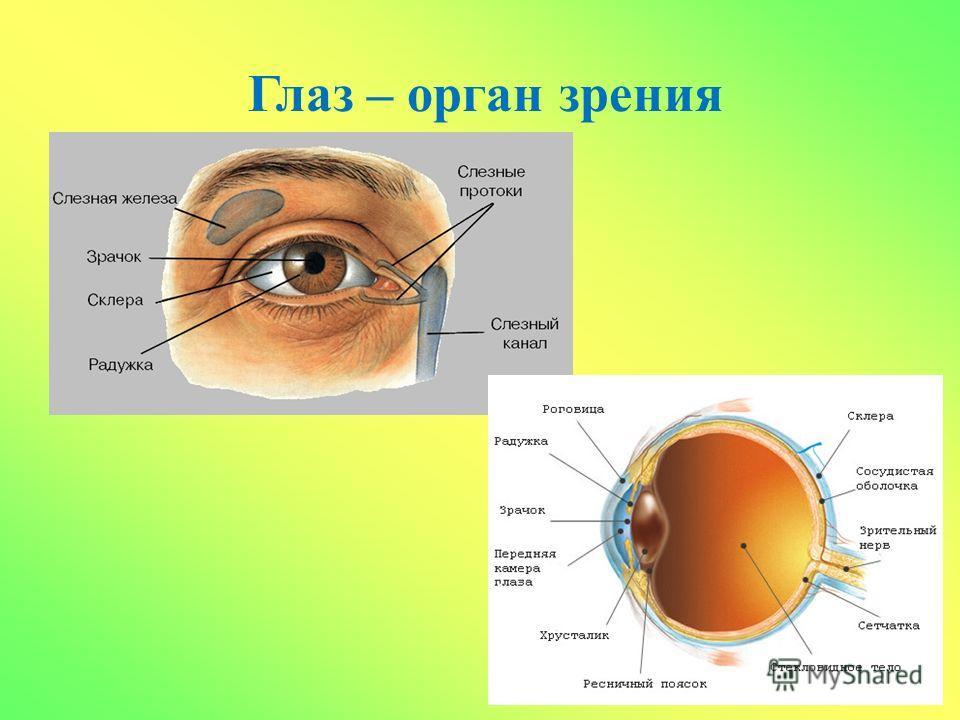 Народные средства против морщин вокруг глаз