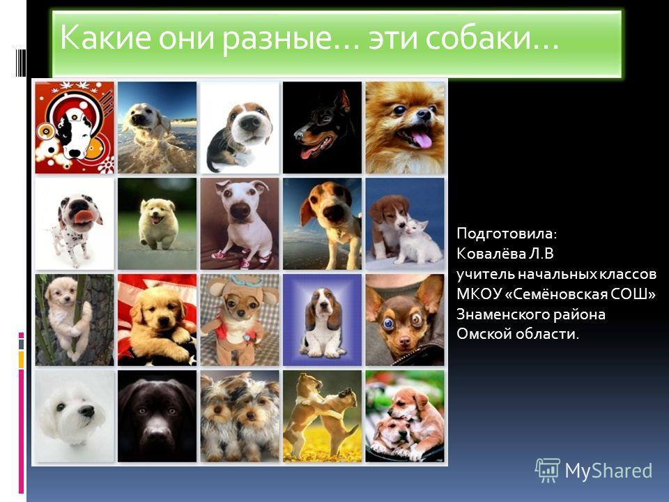 Какие они разные… эти собаки… Подготовила: Ковалёва Л.В учитель начальных классов МКОУ «Семёновская СОШ» Знаменского района Омской области.