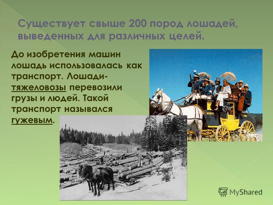 До изобретения машин лошадь использовалась как транспорт. Лошади- тяжеловозы перевозили грузы и людей. Такой транспорт назывался гужевым. Существует свыше 200 пород лошадей, выведенных для различных целей.