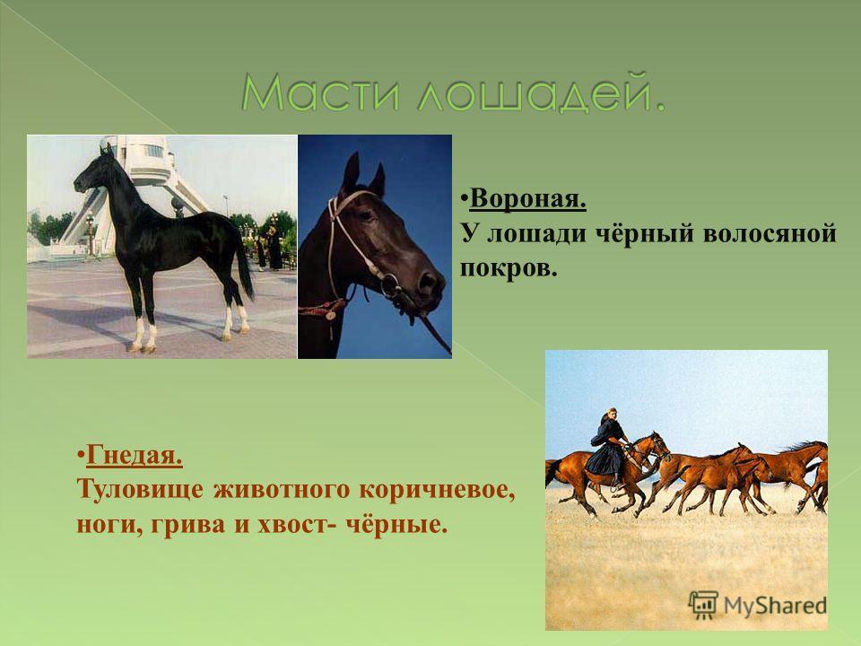 Вороная. У лошади чёрный волосяной покров. Гнедая. Туловище животного коричневое, ноги, грива и хвост- чёрные.
