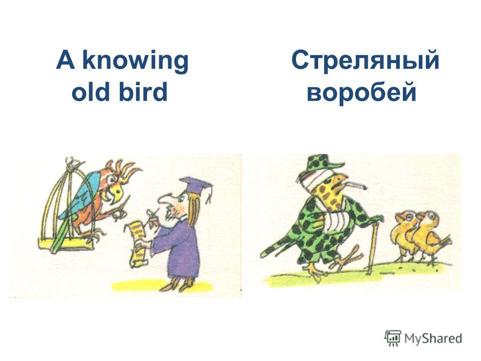 A knowing old bird Стреляный воробей