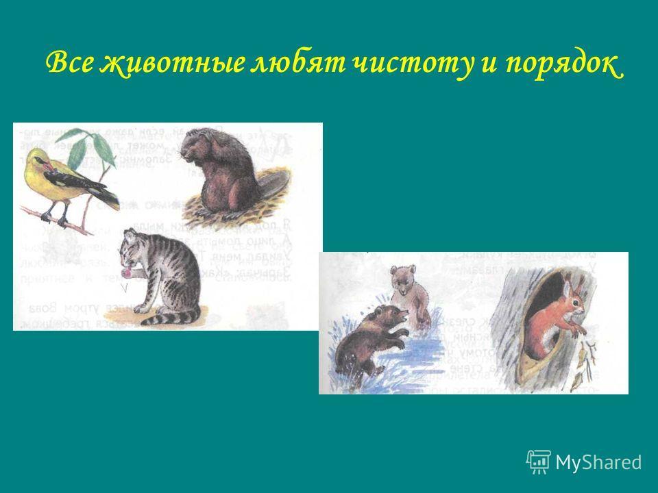 Все животные любят чистоту и порядок