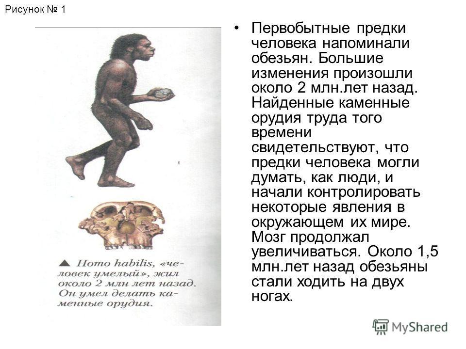 Первобытные предки человека напоминали обезьян. Большие изменения произошли около 2 млн.лет назад. Найденные каменные орудия труда того времени свидетельствуют, что предки человека могли думать, как люди, и начали контролировать некоторые явления в о